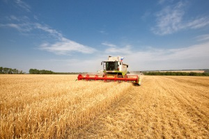 Export of agricultural products of Ukraine to Europe has increased significantly for the first quarter
