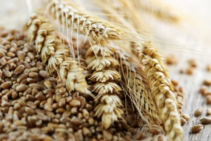 Wheat reserves of European Union continue to decrease