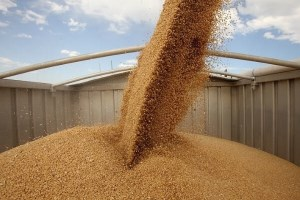 Ukraine shipped 39 thousands tons of grain